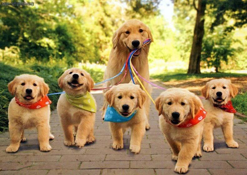 Executive Dog Training Testimonials