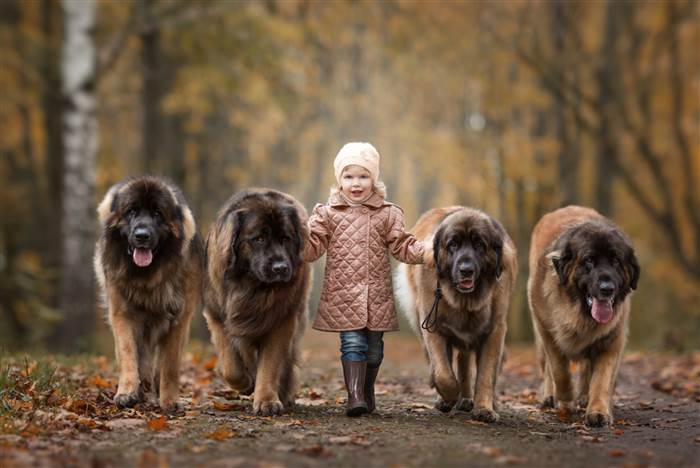 Big Dogs with Small Owner
