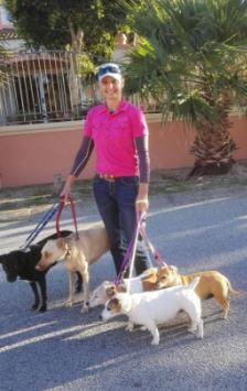 Executive Dog Walking and Executive Dog Training
