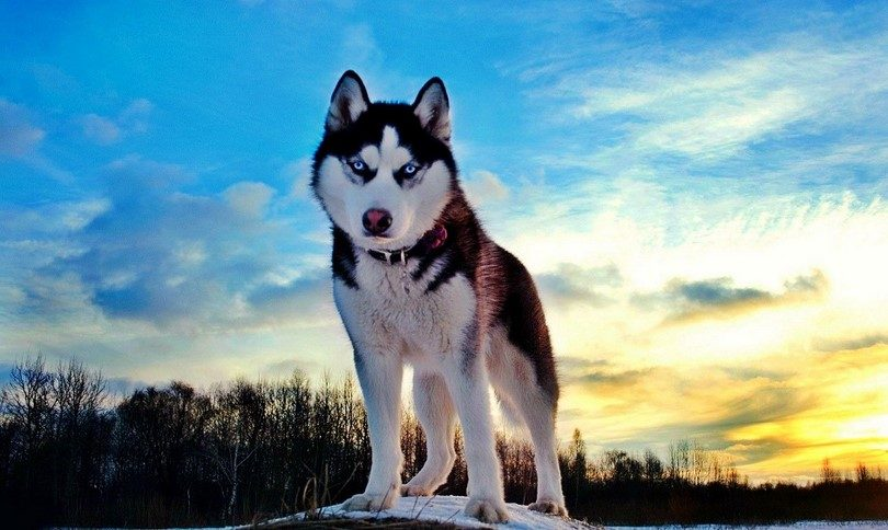 executive dog training packages